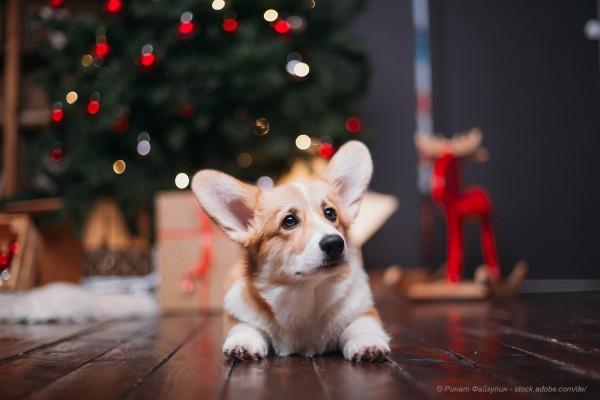 graf-barf-weihnachtsversand