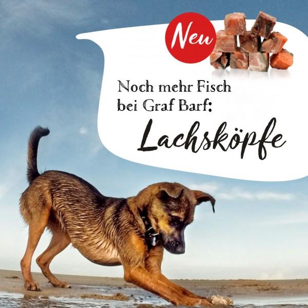 graf-barf-lachskoepfe