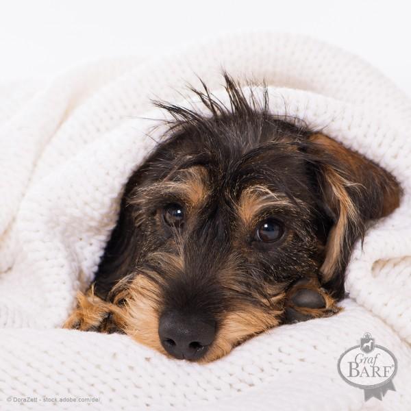 graf-barf-hausapotheke-hund