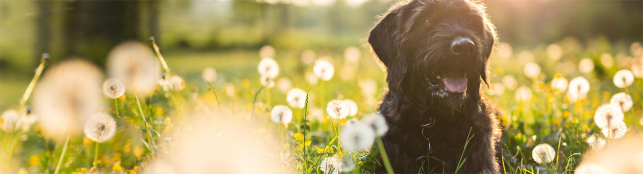 media/image/header-hund-in-sonnenwiese.jpg