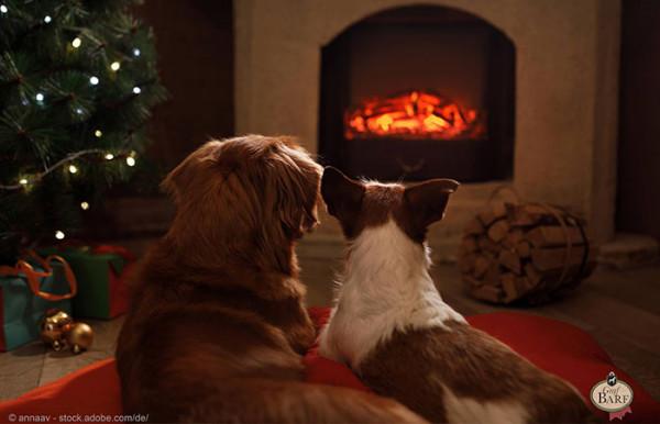 weihnachten-mit-hund