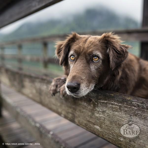 graf-barf-sensibler-hund-senior-hund